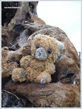 Flotsam teddy bear on driftwood at the beach