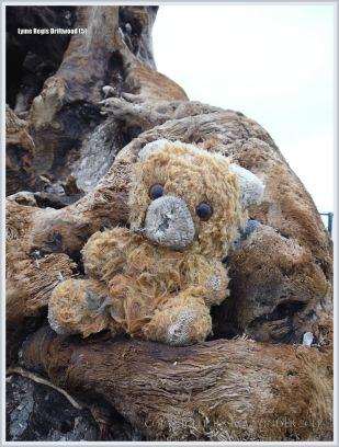 Flotsam teddy bear on driftwood at the beach