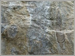 Beach boulder of Portland Cherty Series close-up.