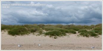 Sand dunes with Marram Grass at Studland