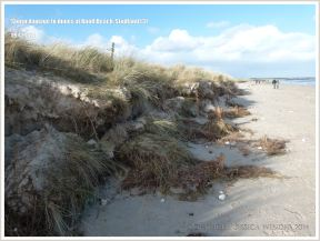 Storm damage to sand dunes