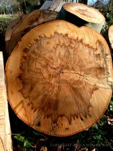 Natural pattern in a cross-section of beech timber