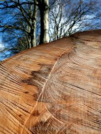 Close-up detail of natural pattern in sawn beech wood