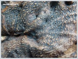 Close-up detail of root bark pattern and texture on driftwood