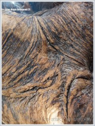 Close-up of bark on driftwood roots