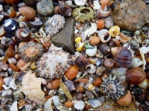 Seashells at Dogs Bay