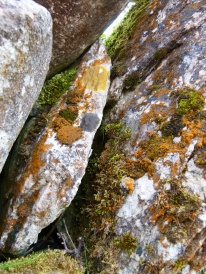 Lichens and moss on an old stone wall
