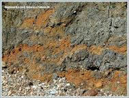 Iron-stained Kimmeridgian mud and shale in a landslide at Ringstead Bay