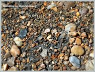Pebbles and gravel stuck in Kimmeridge Clay