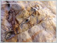 Ringstead Bay Rock Textures & Patterns 24