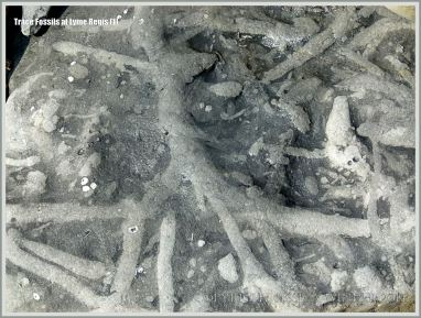 Natural patterns made by trace fossils in rock