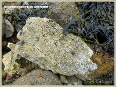 Boulder on the beach with tube-worm holes