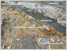 Vertical section through Jurassic strata showing Ringstead Coral Bed