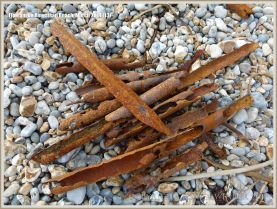 Rusty iron palings on the shingle beach at Ringstead Bay