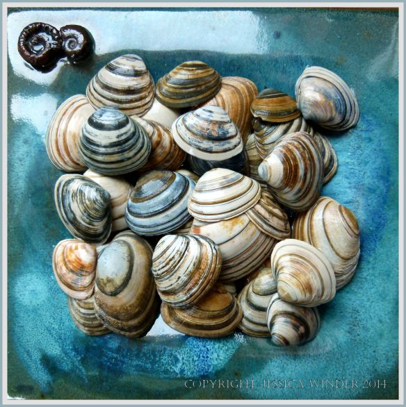 Striped seashells on a plate