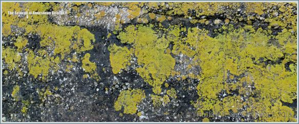 Close-up of lichens on a sea wall