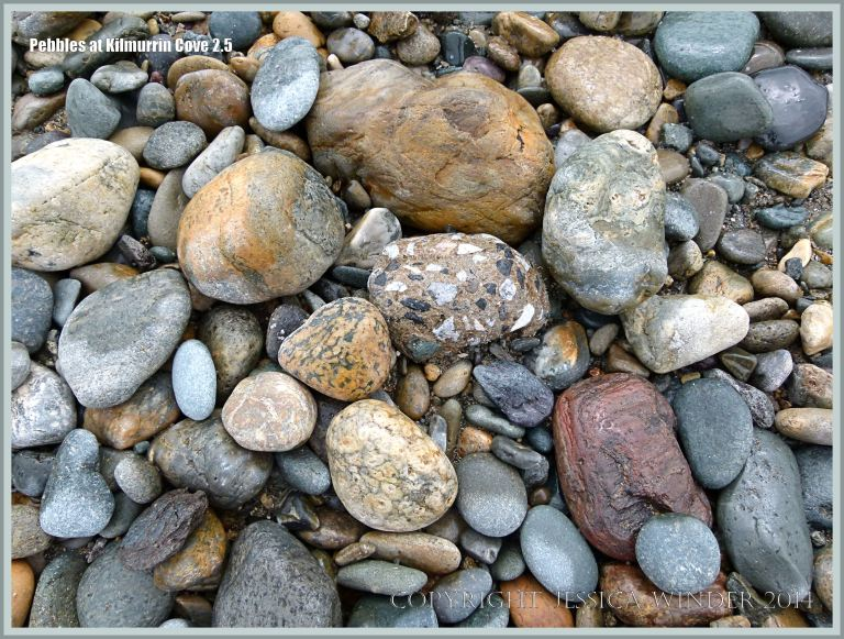 Wet beach stones in a cove rimmed by cliffs of Ordovician rock topped by glacial deposits