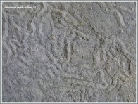 Liscannor flags with Olivellite trace fossils in a wall at the Cliffs of Moher