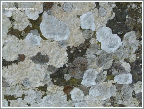 Natural pattern of lichens on Liscannor flags in a wall at the Cliffs of Moher