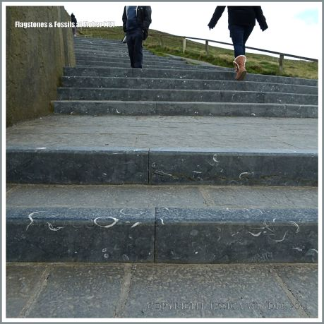 Steps of Liscannor flagstones and fossiliferous limestone at the Cliffs of Moher