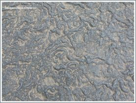 Liscannor flags with Olivellite trace fossils