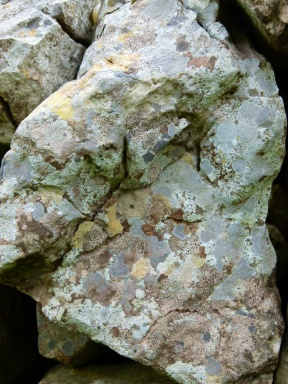 Lichens on a dry stone wall