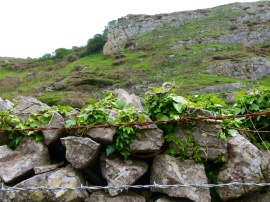 Dry stone wall in the valley near Mewslade Bay