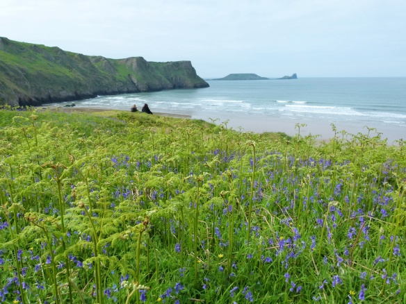 View through the bluebells towards Worms Head