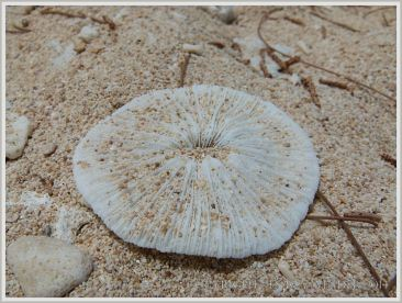 Bleached coral on the tropical beach at Normanby Island