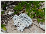 Bleached coral on the beach at Normanby Island