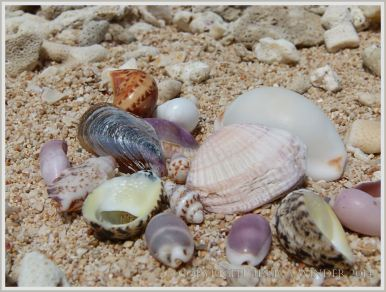 Assortment of tropical seashells on the beach at Normanby Island