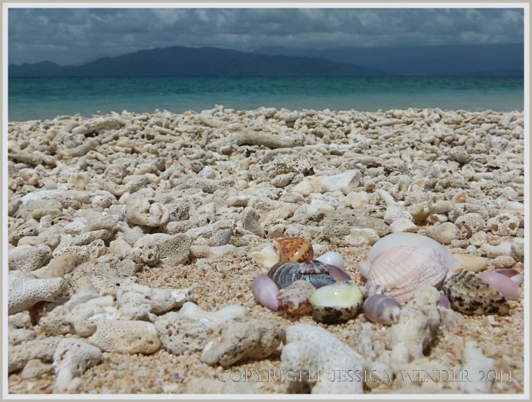 Coral beach with seashells at Normanby Island