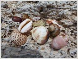 Seashells on driftwood at Normanby Island