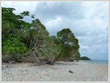 Tropical vegetation fringing the coral beach at Normanby Island