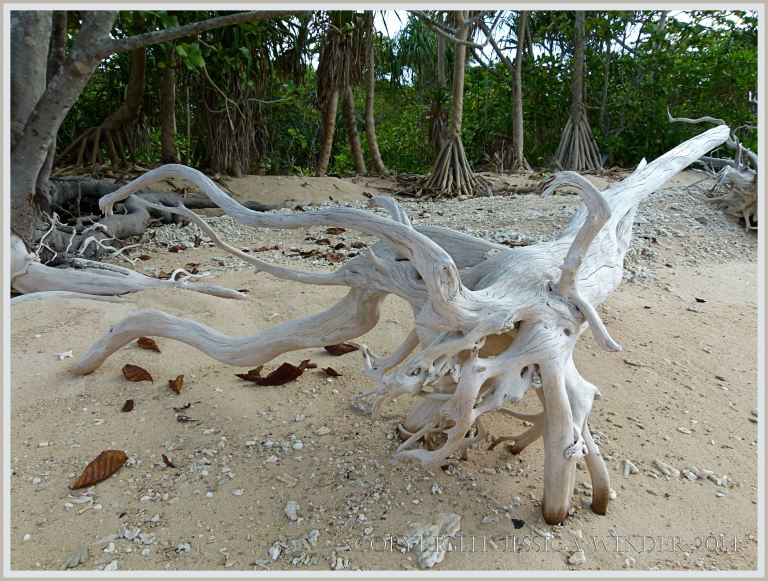 Driftwood on coral beach