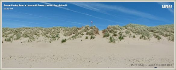Sand dunes at Rhossili in May 2012