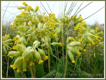 Flowers on the Gower Peninsula