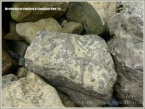 Rock textures showing trace fossils on the Dorset coast