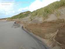 Erosion of sand dunes showing stratification of sand