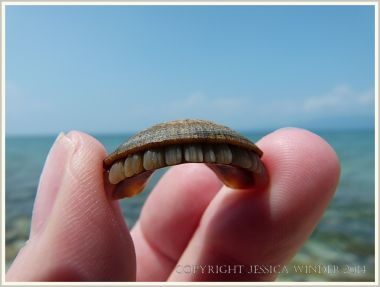 Mystery beach find - possibly fish teeth - on Normanby Island
