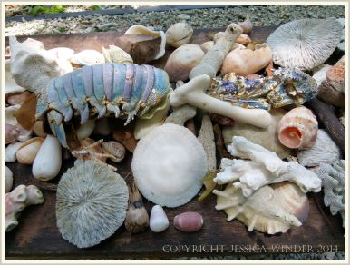 Beachcombed finds on rock at Normanby Island