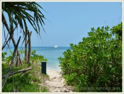 View from the trees to the beach on Normanby Island