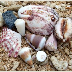 Seashells on coral sand