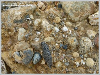Isle of Portland raised beach deposits (Portland East Beach)
