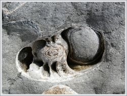Natural cross-section through a large fossil ammonite in a boulder on the beach at Lyme Regis