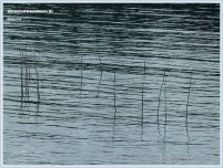 Posts from a herring fish trap at Grand Manan.