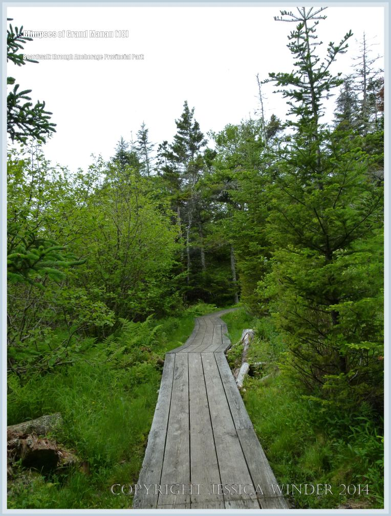 Boardwalk through the trees at Anchorage Provincial Park on Grand Manan