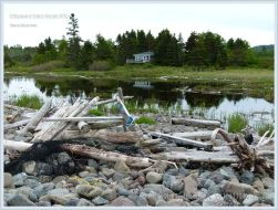 Driftwood on natural beach stone dam at Whale Cove on Grand Manan