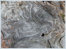 Pattern in driftwood at Whale Cove on Grand Manan