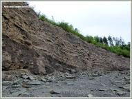 Sedimentary rock strata from the Cumberland Group at Joggins Fossil Cliffs